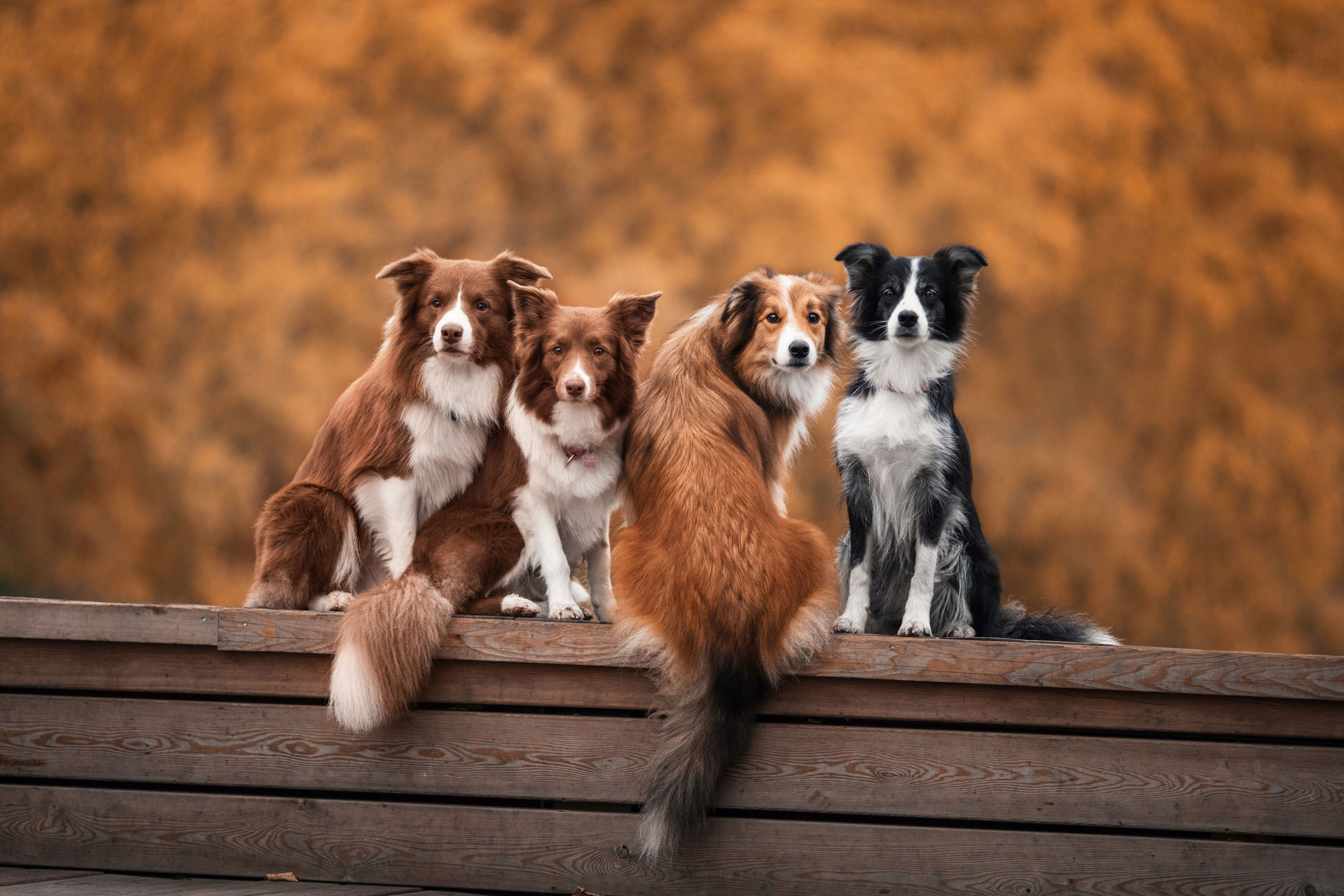 Immunsystem der Hunde
