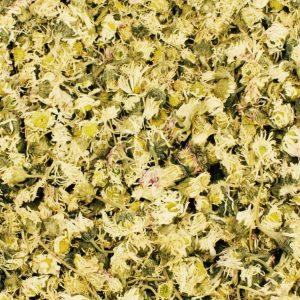 Gänseblümchen ganz – getrocknet