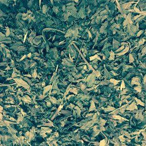 Melissenblätter geschnitten – getrocknet