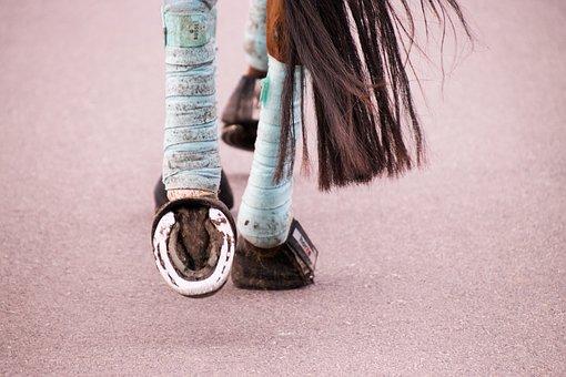 Sehnenschaden beim Pferd