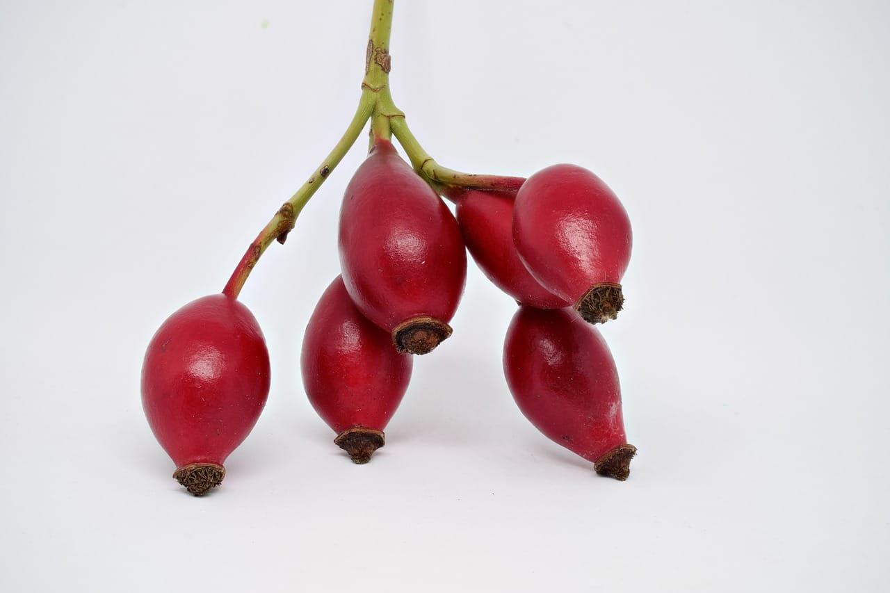 Die Hagebutte ( Rosa Canina) kraftvolles aus der Natur