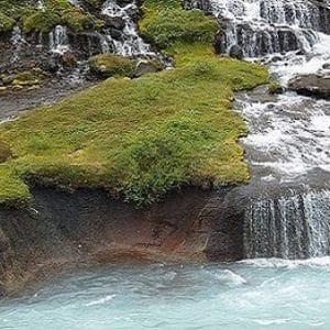 Island Moos fein geschnitten – getrocknet