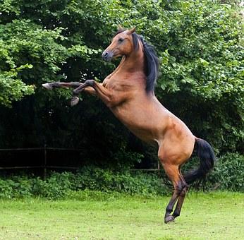 Karpalgelenk blockiert Pferd