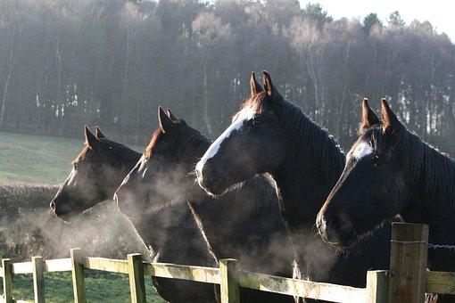 Pferdekräuter gegen Husten