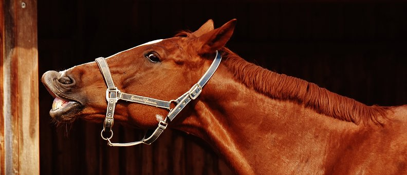 Magnesiummangel Pferd