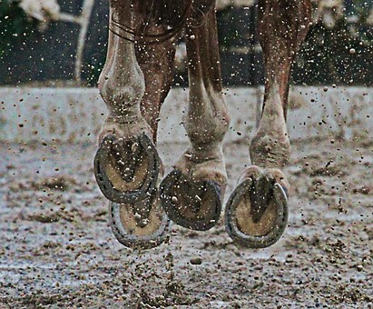 Starker Pferdehuf
