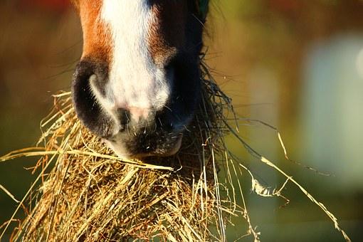 Welches Futter für Pferde