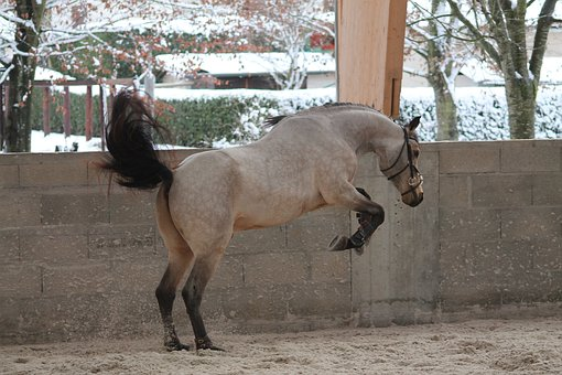 Arthrose Pferd