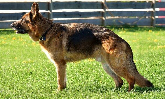 Arthrose Hund