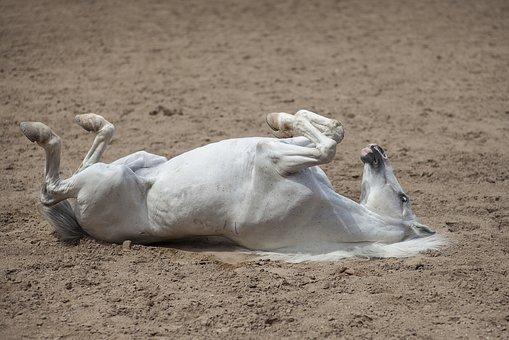 Read more about the article Ekzem bei Pferden