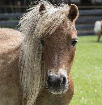 Wurmkur Pferd