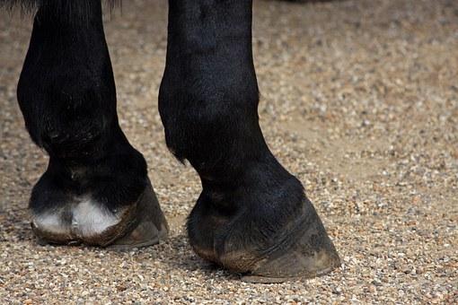 Fesselträgerschaden Pferd