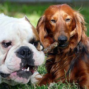 Futterberatung für Hunde – Neu
