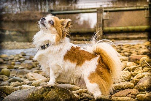 Read more about the article Darmsanierung beim Hund