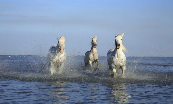 Read more about the article Grünlippmuschel Pferd